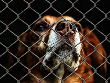 Światowy Dzień Zwierząt - wspierajmy zwierzaki 1%